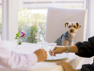 【1日1組限定】プロカメラマンが撮影!愛犬と一緒に残すメモリアル♪画像&フォトBOOKプレゼント付