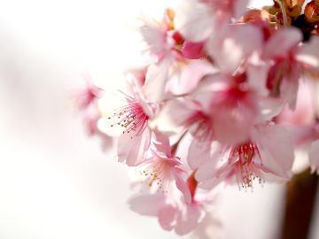 【桜の舞-竹-】ひと足早い春の訪れを楽しむ・。*【1泊2食付】―特典付ー