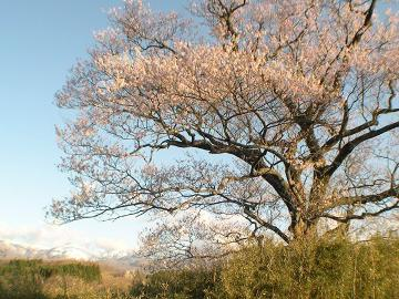 【期間限定】桜色の那須高原をめぐる春のとち旅!お花見応援☆春風ティータイム特典付《素泊まり》