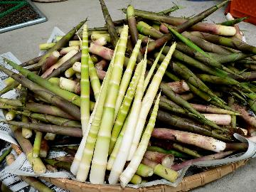 ☆期間限定☆信州の春味覚を召し上がれ♪山菜を使った春ならではの和洋折衷ディナー【1泊2食付】