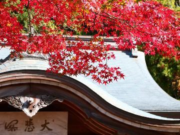 【季節を満喫】 -秋ー 紅に染まる山々を望みながら秋そのものを享楽する
