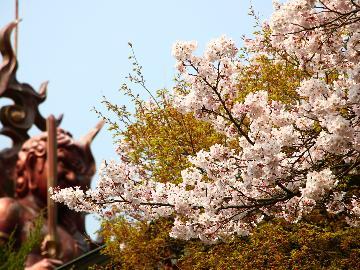 【季節を満喫】 -春- 桜と新緑の季節を存分に謳歌する