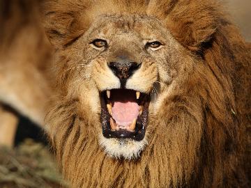 [1泊2食]【那須サファリパークチケット付き】ドキドキ!野生動物が潜むサファリゾーンを探検しよう☆