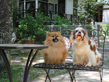 [素泊まり]【愛犬と自由に那須旅】ワンちゃんアメニティ充実♪林間ドッグランで元気いっぱい遊んじゃお☆