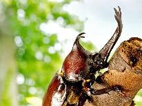 【★昆虫の王国★】芝生の上でBBQ&夜はカブトムシ、クワガタ捕り!お子様の自由研究にもぜひ!【1泊2食付】