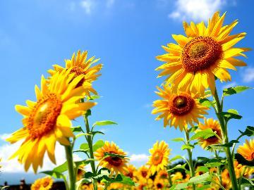 【夏の3大特典付】夏にぴったり!この時期だけのお土産、サービス付きプラン♪[1泊2食付]