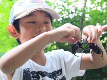 【夏休み限定】小学生以下 無料♪【昆虫採集ツアー】大人も楽しめる!1泊2食付