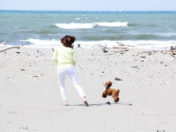 <GoToトラベルキャンペーン割引対象>☆ワンOne旅行☆愛犬と一緒に1人旅《morning》【平日限定】