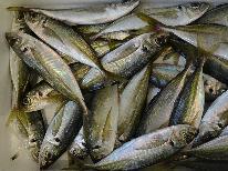 ☆サビキ釣り体験☆自分で釣った魚を味わおう☆手ぶらでOK!初心者でも簡単なサビキ釣り体験プラン♪