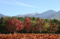 <GoToトラベルキャンペーン割引対象>【一人旅★素泊り】紅葉を楽しむ秋♪ 木曽の旅路を自由気ままに♪最終チェックイン23時までOK