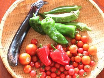 【皆で野菜収穫!】当宿の畑には様々な野菜や果物がたっくさん★季節の自然の恵みを頂きます♪《2食付》※野菜収穫体験料別途必要※