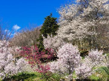【山梨県民限定・やまなしグリーン・ゾーン宿泊割り】【スタンダード】開湯650年の温泉!地元ならではの優しい味わい『郷土料理』を楽しむ♪