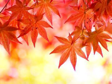 【2食付】日本一番早い紅葉を見よう!期間限定特典付★秋の味覚を楽しむ「あいべつ特産きのこフルコース」