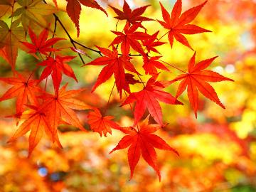 【秋限定】秋しか味わえない旬の味覚に舌鼓♪人気パワースポット『温泉神社』『殺生石』の紅葉を楽しもう!