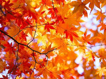 【秋限定】☆栃木の人気地酒4種飲比べ付☆ほろ酔い気分で那須高原の紅葉を満喫♪