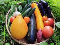 【季節の野菜のせいろ蒸し】自家製野菜を一番おいしい食べ方で!◆手作りの3種類のタレで舌鼓♪東北限定