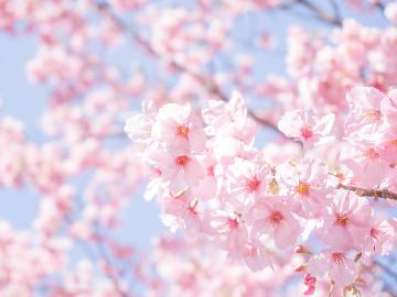 *春爛漫*東根で春を楽しもう♪のゝかのお花見プラン【特典付き】