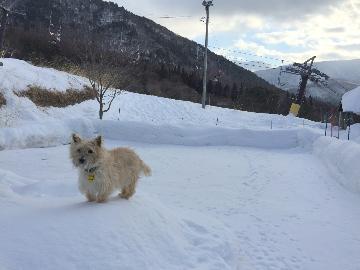 ワンちゃんと雪遊び & ワンワン温泉で温かい♪わんちゃん大喜びアイテム!思いっきりペットと遊べて楽しい プラン