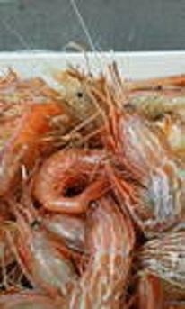 元祖!「日本海えび会席」と「季節の魚会席」のコラボ