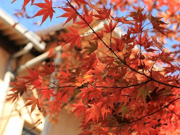 【紅葉プラン】宿周辺には名所がいっぱい♪秋の行楽シーズン応援企画!