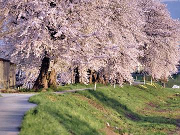 【地酒付き】*春うらら*芽吹きの季節!山菜料理と美味しい地酒でおもてなし~お花見プラン~