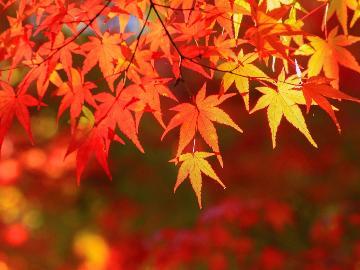 【紅葉】展望風呂から眺める秋景色。色鮮やかな秋を湯と食でお楽しみください♪■1泊2食