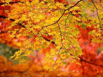 【山中湖&河口湖紅葉まつり】幻想的な紅葉ライトアップ☆ 1泊朝食付♪