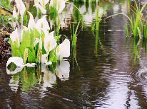 《今春★期間限定》 戸隠の絶景「水芭蕉」と7年に一度「戸隠神社式年大祭」を楽しむ2食付プラン