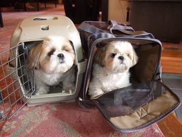 1泊2食付き【4室限定】ペットも旅行に連れてって~!犬・猫ちゃん同宿プラン☆お食事も個室で一緒に♪