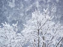 【選べるリフト券&特典付】サンタプレゼントパークでスキー&スノボを思いっきり楽しもう♪1泊2食付き