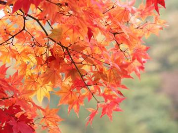 【秋の優雅旅】秋の味覚!「きのこ鍋」プラン♪仁王門屋「そばソフト」が無料!特典付《1泊2食》