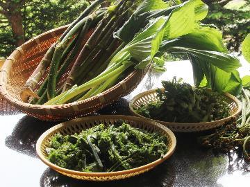 【春の味覚】 山の恵み☆彡 山菜の宝庫・野沢温泉で山菜を味わうプラン 【1泊2食】