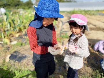 【夏の農業体験】じゃがいも掘り体験☆じゃがいもがじゃ~がじゃが掘れる♪[特典付]