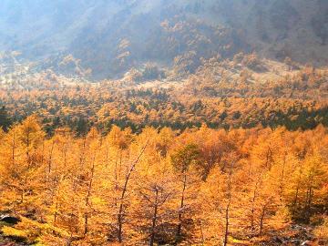 【秋の味覚】美しい紅葉ときのこ料理を楽しもう!浅間の秋満喫プラン♪【1泊2食付】