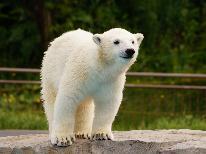 《1日5組限定》二人の旅行♪北海道に来たら旭川動物園で決まり♪車で15分のドライブで可愛い動物に会いに行こう!