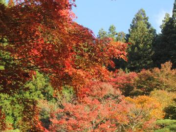 《秋の醍醐味三昧》~地酒×紅葉和庭園×紅葉露天~旬の和会席とふくしまの美味しい地酒を堪能する温泉旅!