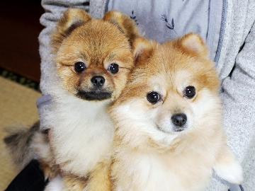 【1日2組限定】大好きなペットと過ごす休日♪小型犬ペット料金無料<1泊2食付>