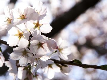 。☆信州の美しい花々を楽しむ☆。『水芭蕉』、『バラ』など、信州の春は花満開♪【1泊2食付き】