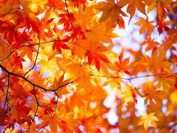 【紅葉シーズン限定大特価】 当館人気№1★<長崎和牛陶板焼き会席>プラン